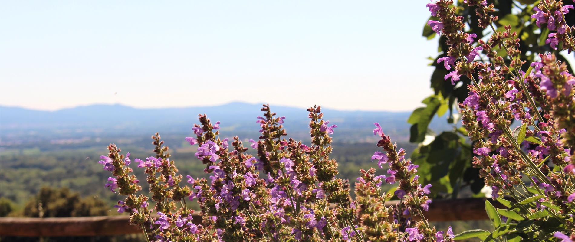 Entre la plana de la Selva i Girona